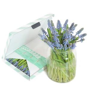 brievenbus-geschenk-met-verhaal-blauwe-druifjes