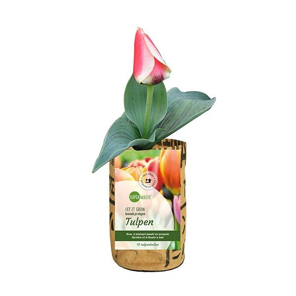 Super Tulip Pot | tulpenbollen