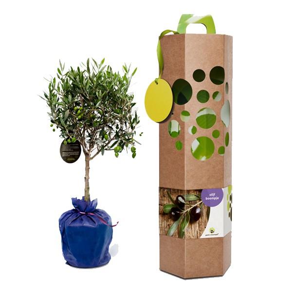 olijf-boom-geschenk-met-verhaal