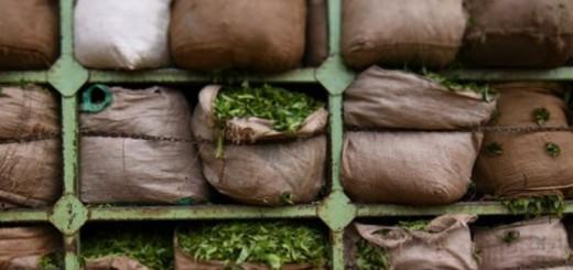 GmV-tea-bags-india_2