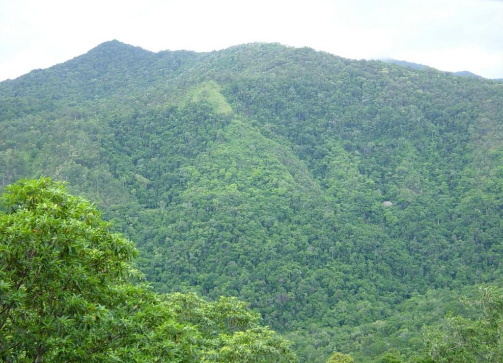 Rainforrest