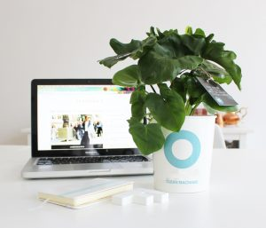 healthy air office plant