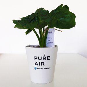 Pure Air Ballast Nedam