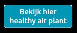 bestel healthy air plant